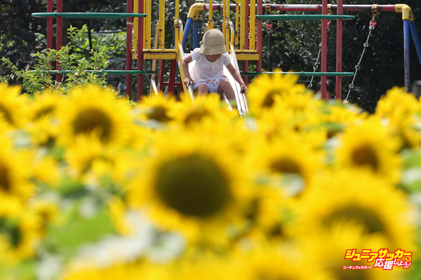 A girl plays on a slide in front of a sunflower field in Tokyo, Japan, on Monday, Aug. 3, 2015. The Japan Meteorological Agency reported that Tokyo area recorded a temperature of 35 degrees on Aug. 3. Photographer: Yuriko Nakao/Bloomberg via Getty Images