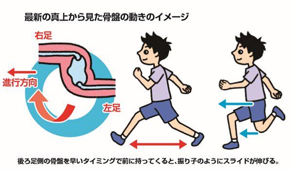 骨盤2(走り方)