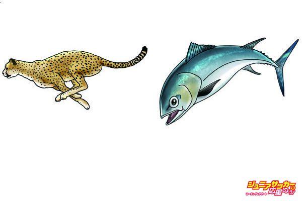 ヒグトレ_チーター魚